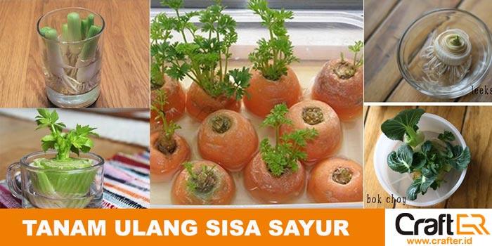 Sisa sayur ditanam ulang