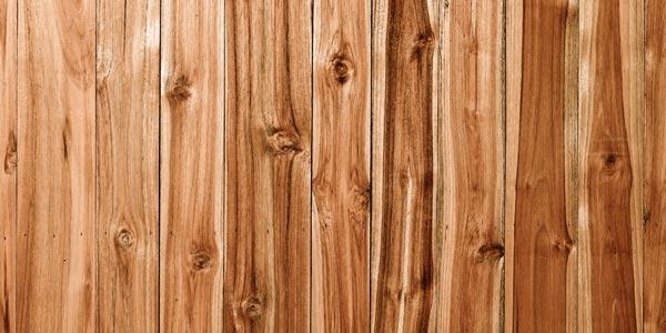 kayu akasia dan harga kayu akasia