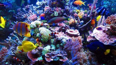Cara membuat akuarium air laut