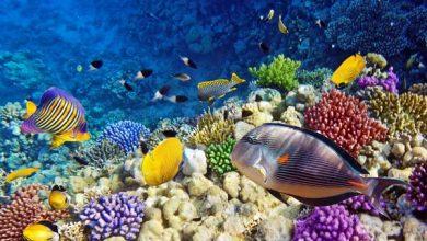 Jenis ikan akuarium laut